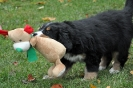 Ende 7. Woche: Damaris hat Rudolph erlegt!